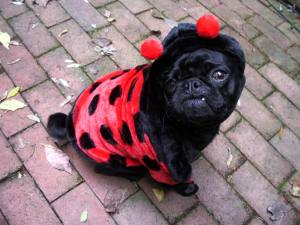 Lucy the Lady Bug