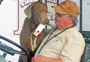 Photo Captions: Shady Grove owner Neil Selby and author Julie Reardon's Chesapeake Bay Retriever Usher, that Selby trained and handled to his AKC Master Hunter title.