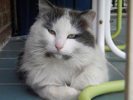 Urban Garden- Wilson the Cat