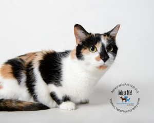 Pet of the Month-French Fry