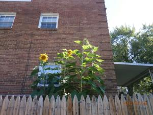 Urban Garden 4 (1)