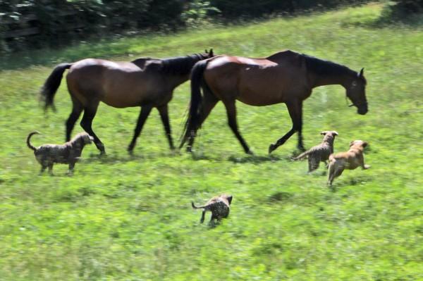 horsesndogsg_4469